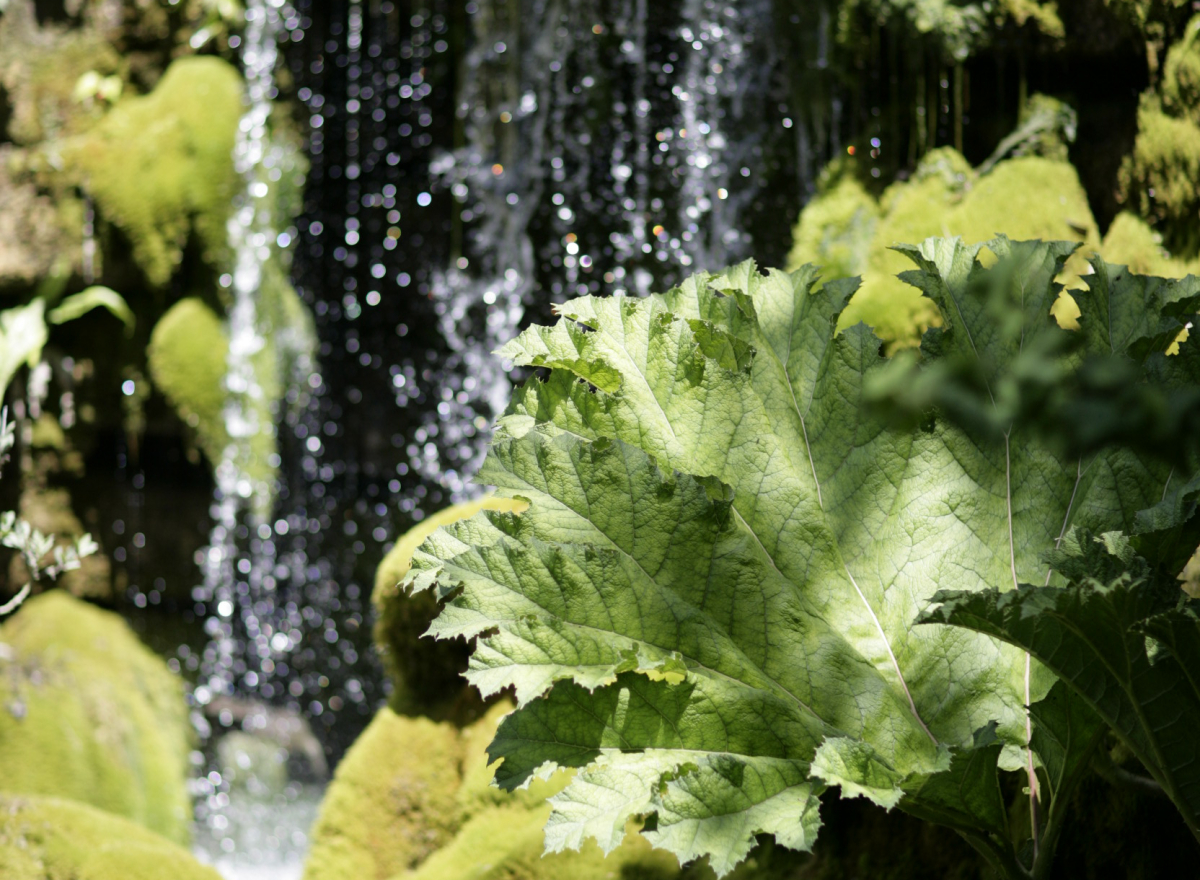 A green leaf in focus, behind it a waterfall