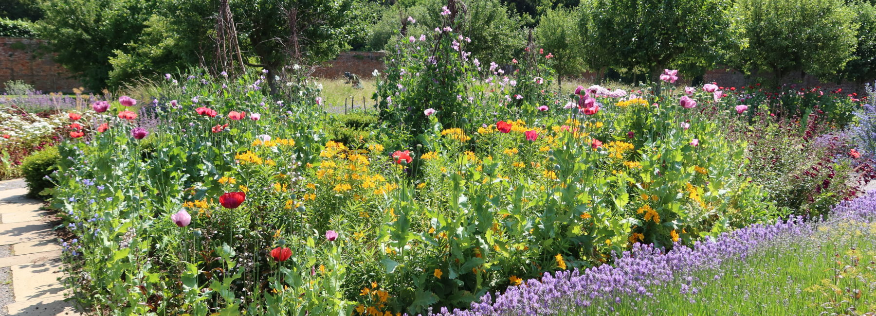 Flower beds with sweetpas & poppies