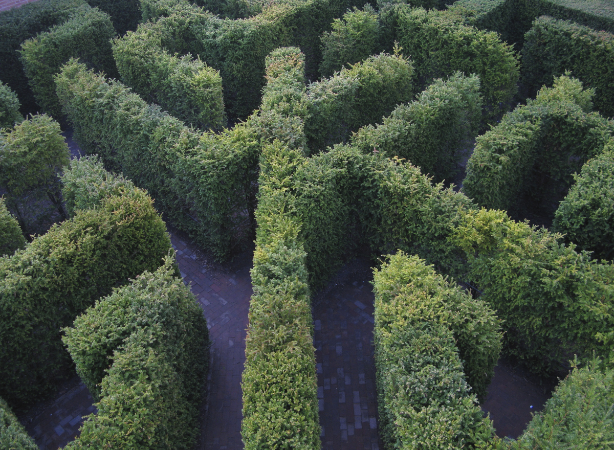 A maze of yew hedges
