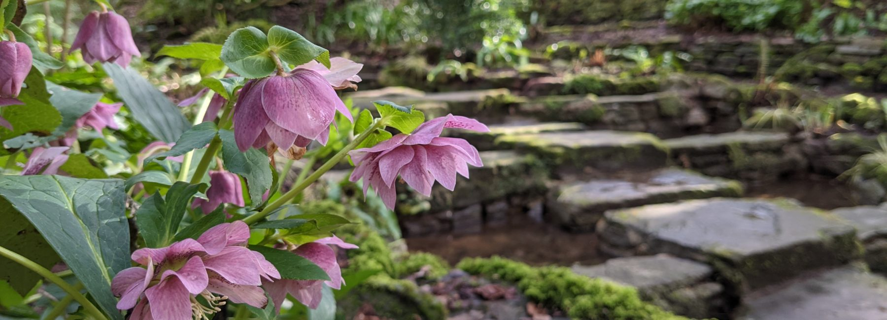 Pink flowers in front of stepping stones